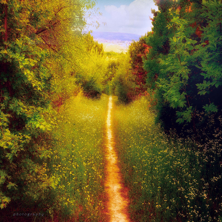 path to the civilization by ildiko-neer
