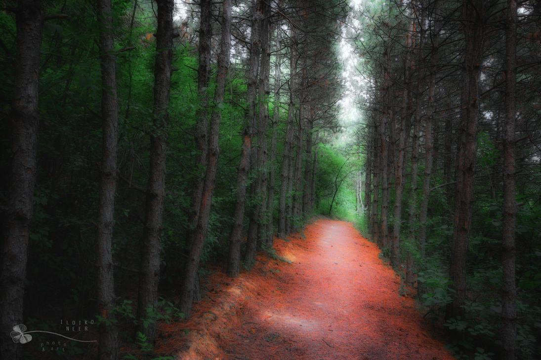 dead end by ildiko-neer