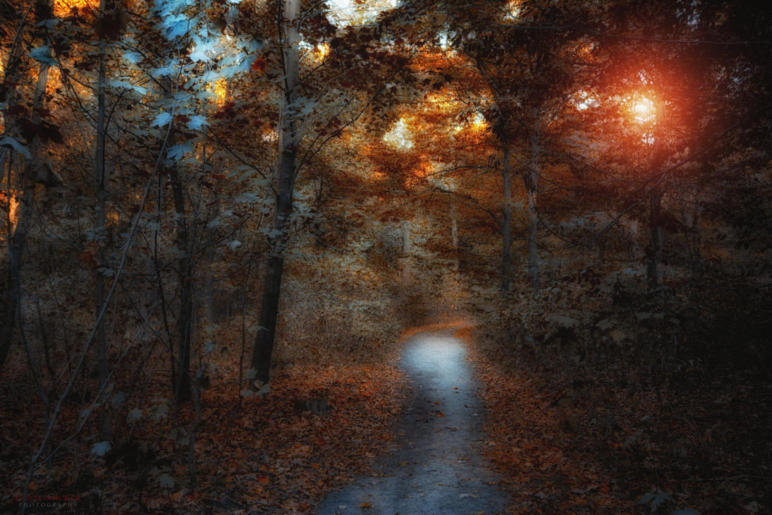 be my guide by ildiko-neer