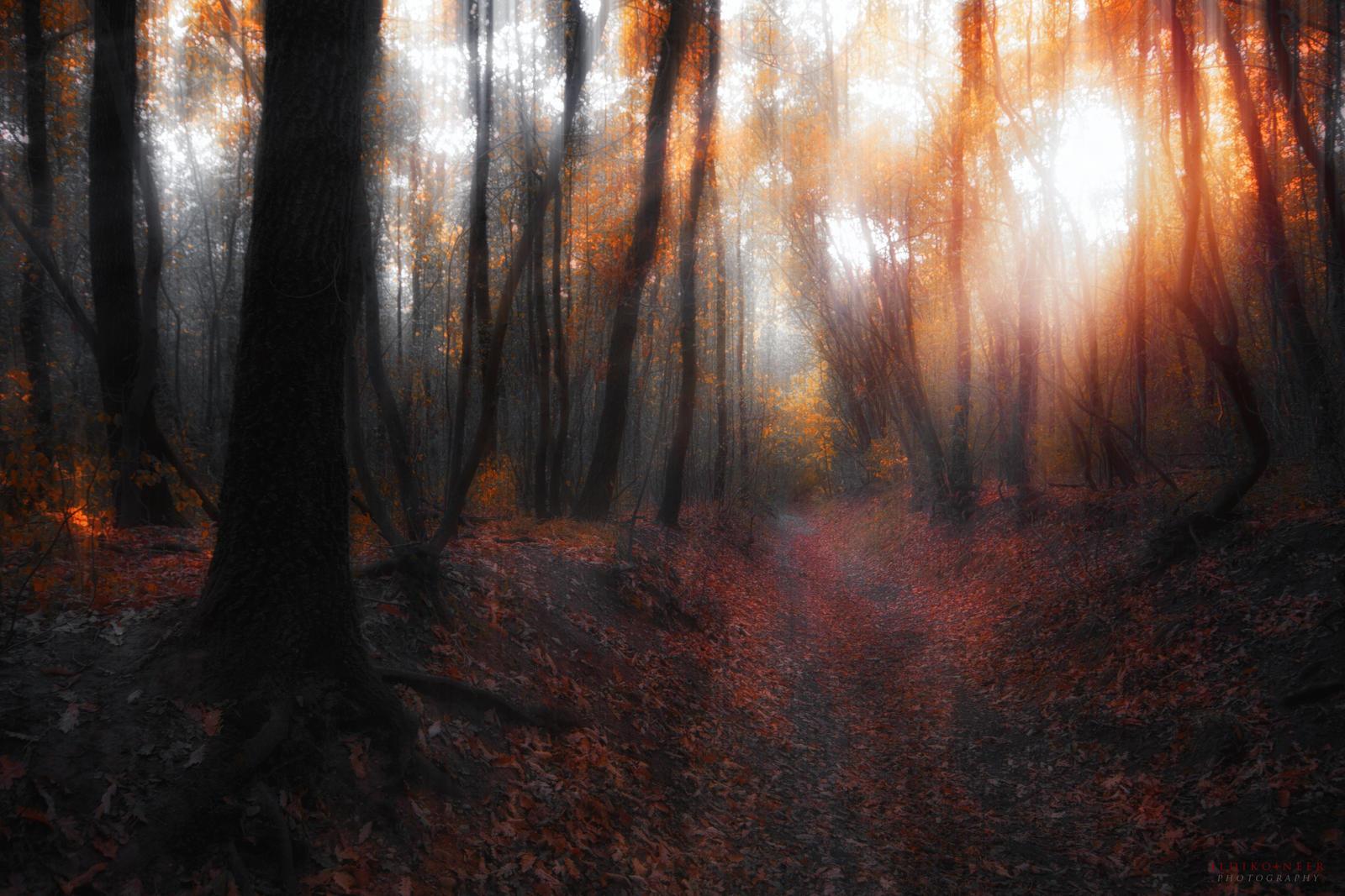 october sunshine by ildiko-neer