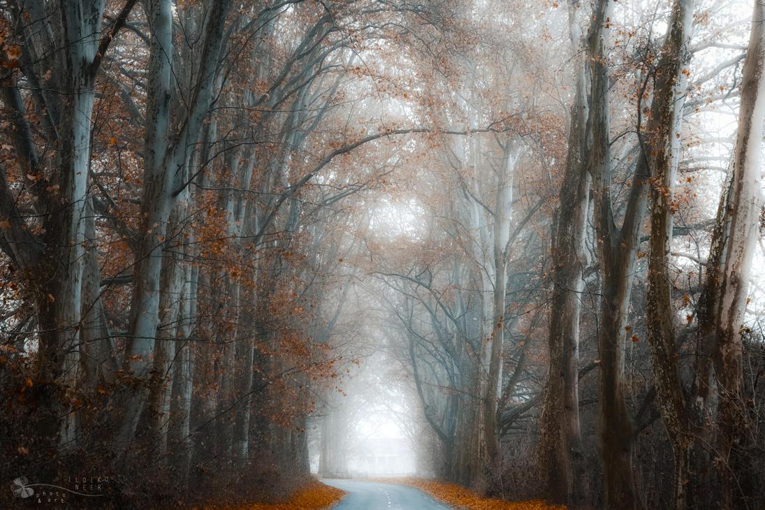 my misty road by ildiko-neer