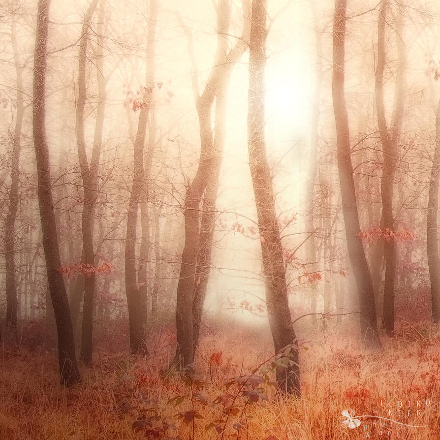 Forest of Goddesses by ildiko-neer