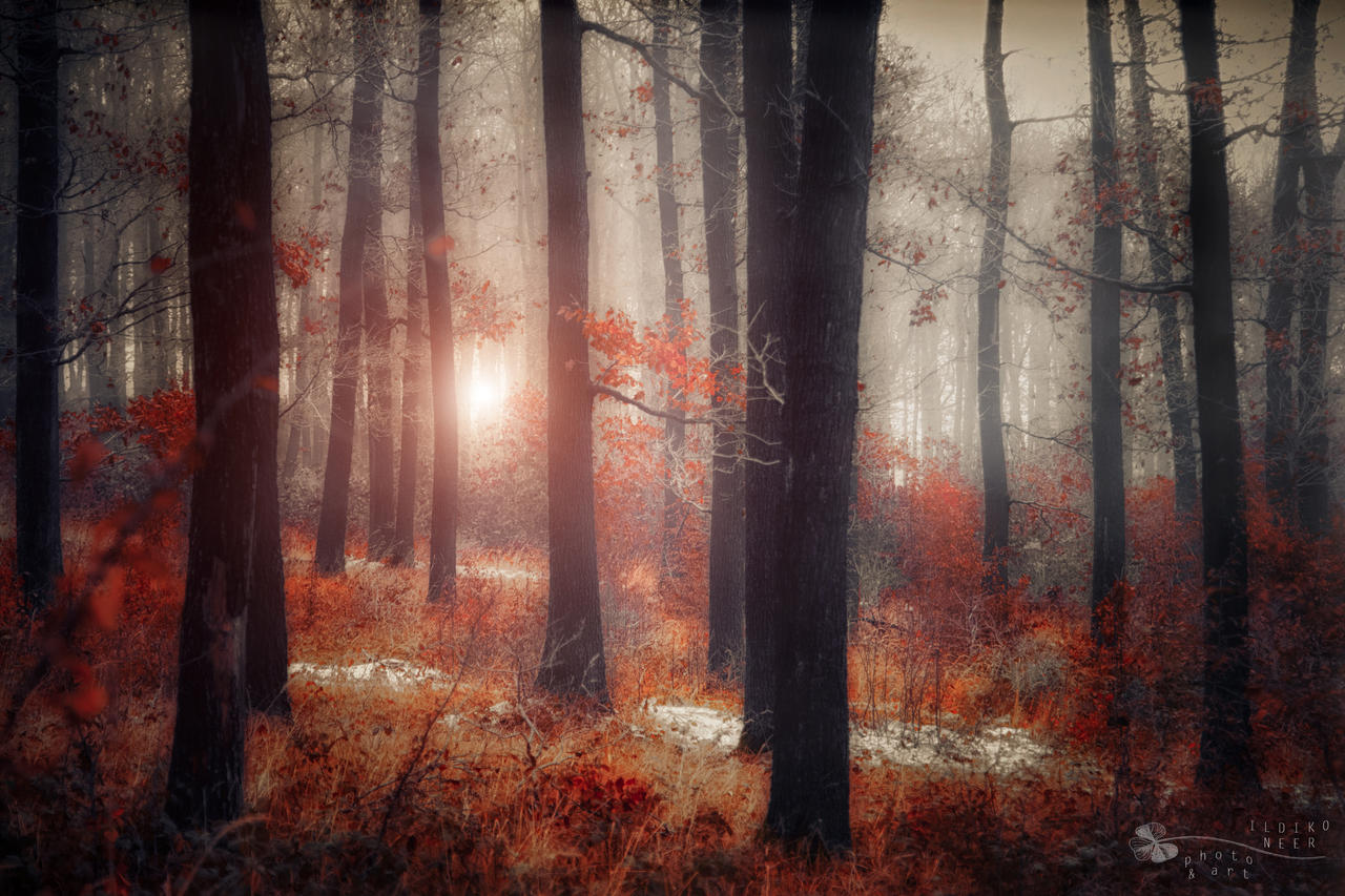 circumstances by ildiko-neer