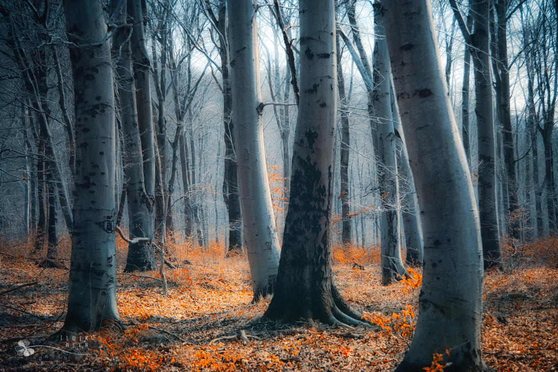 ground of hope by ildiko-neer