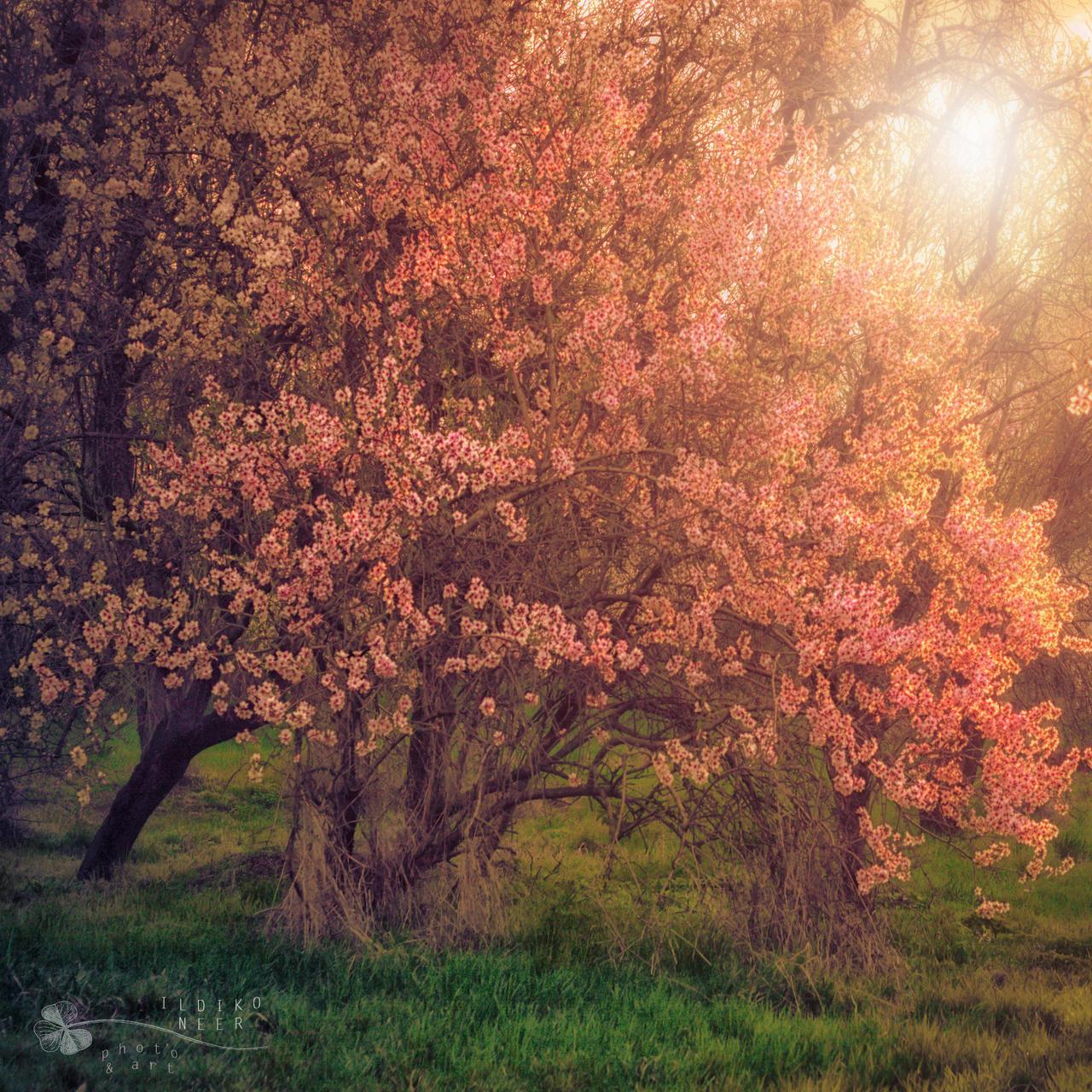 dreamy spring by ildiko-neer