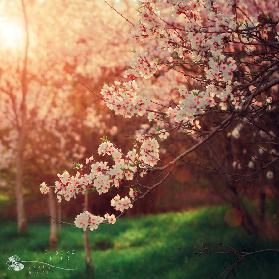 welcome spring by ildiko-neer