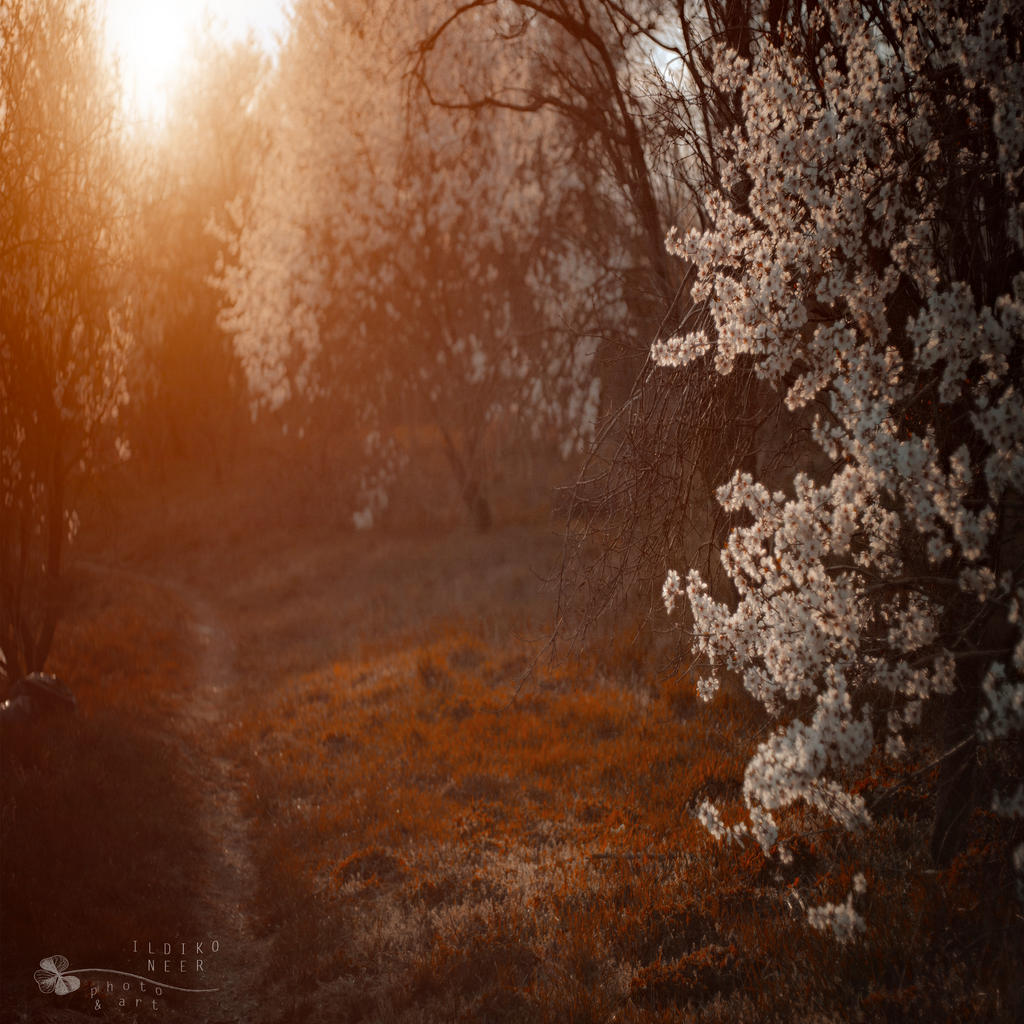 sun goes down... by ildiko-neer
