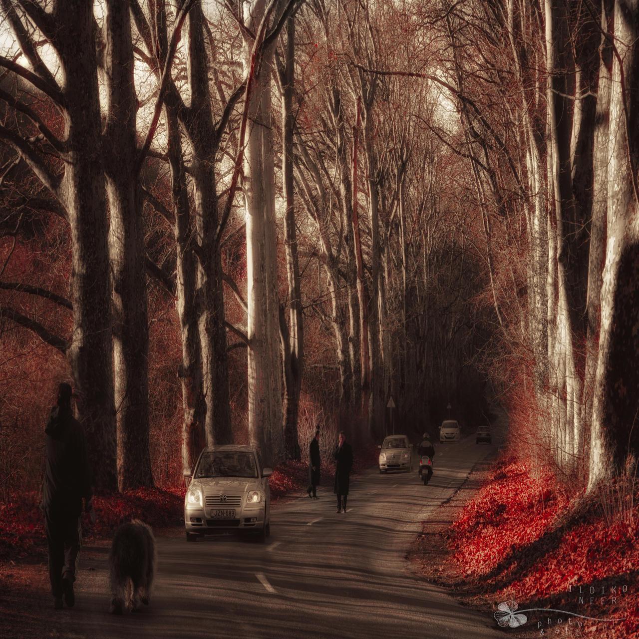 parallel wolrd by ildiko-neer