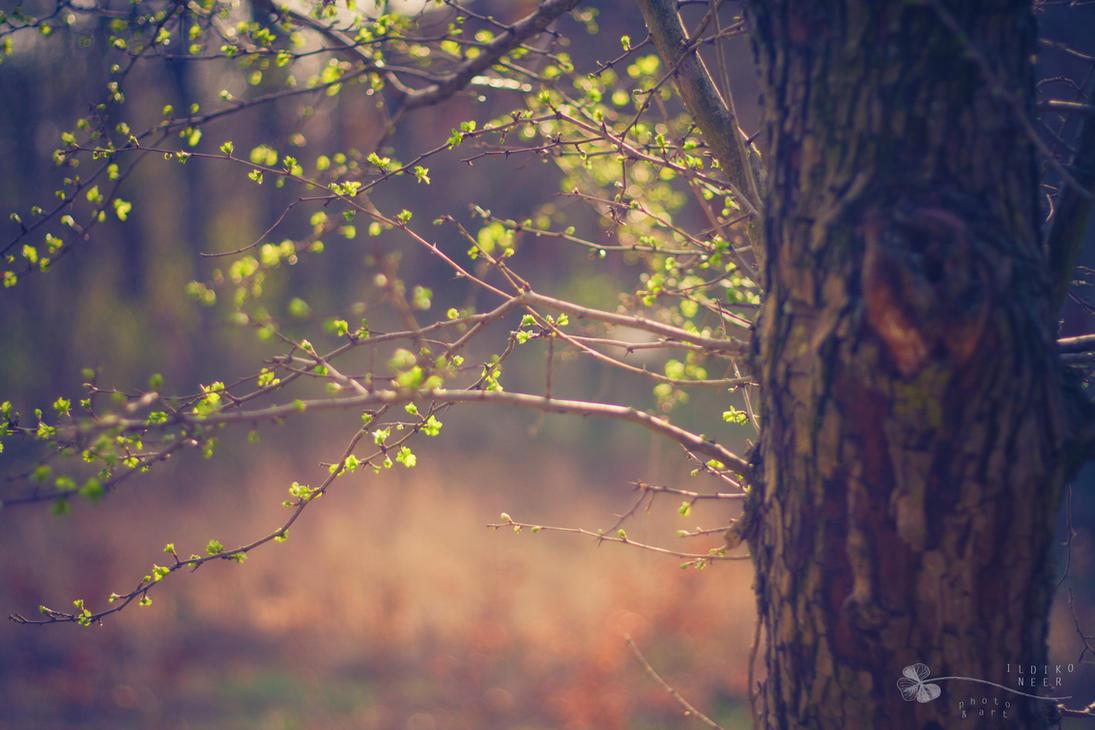 spring in the air... by ildiko-neer