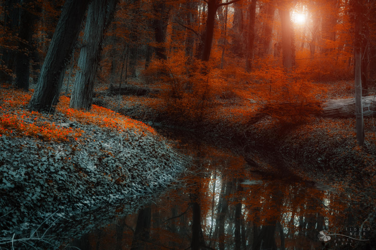 enchanted forest scene II. by ildiko-neer