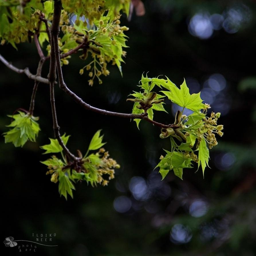 Newborn leaves by ildiko-neer
