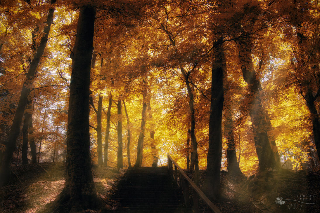 Stairway to Heaven... by ildiko-neer