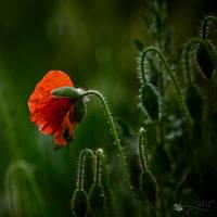 First flower... by ildiko-neer