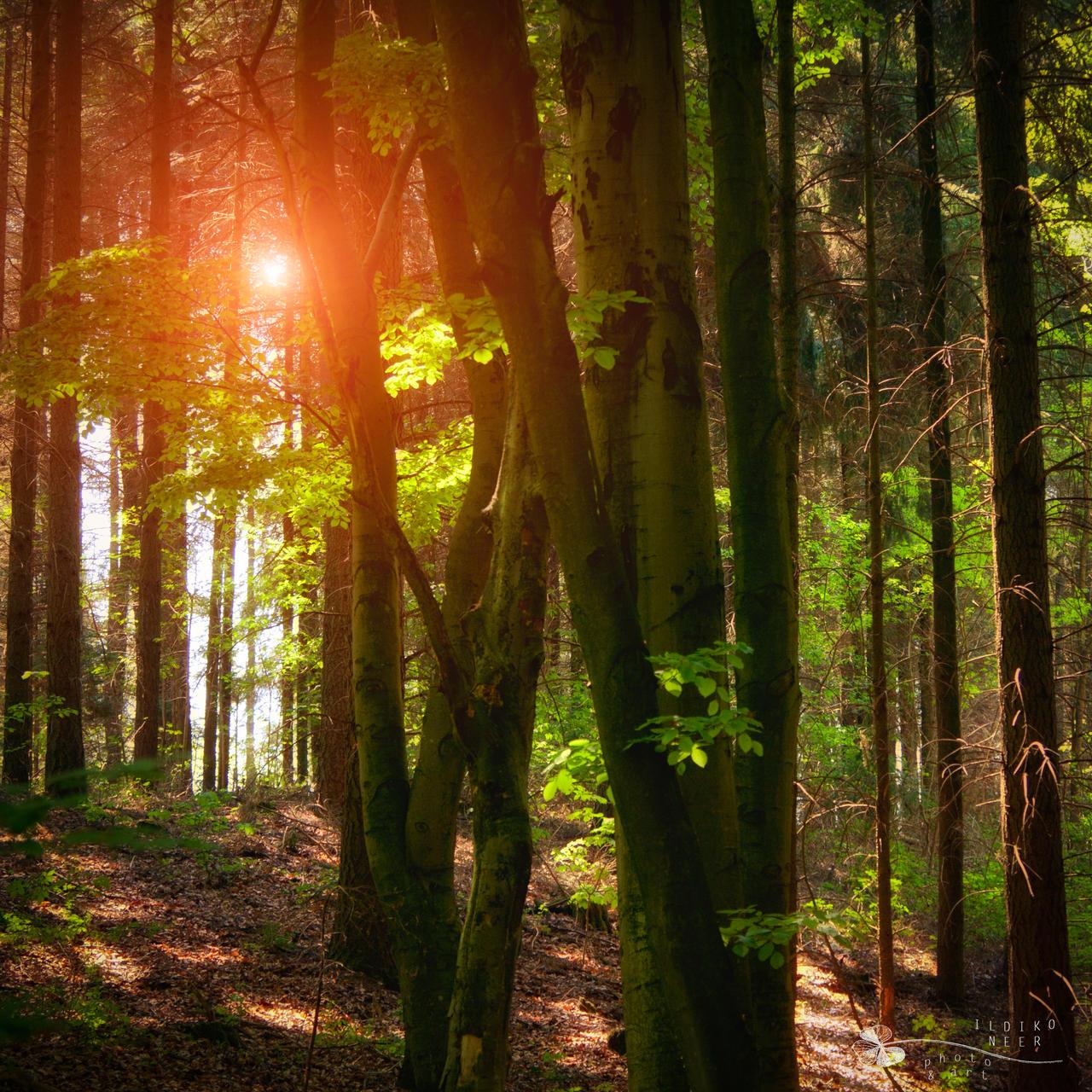 Trees in green... by ildiko-neer