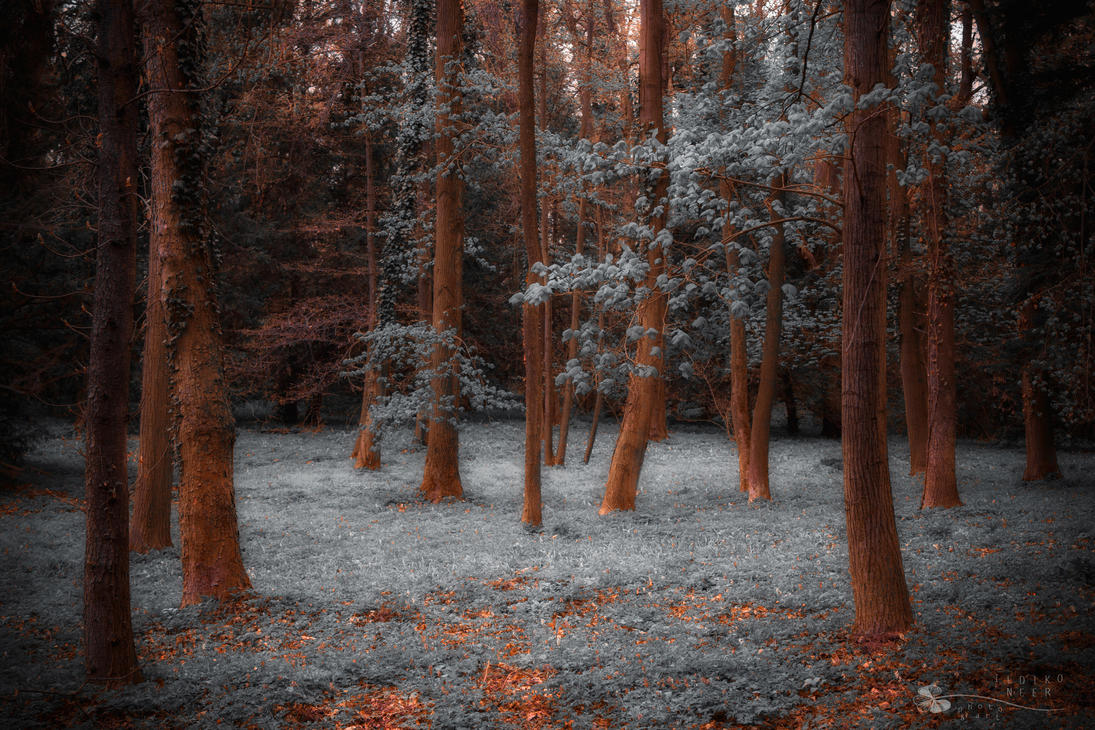 Reality fades away... by ildiko-neer