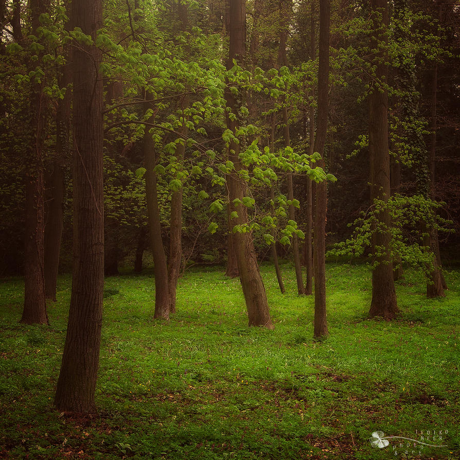 The real ones... by ildiko-neer