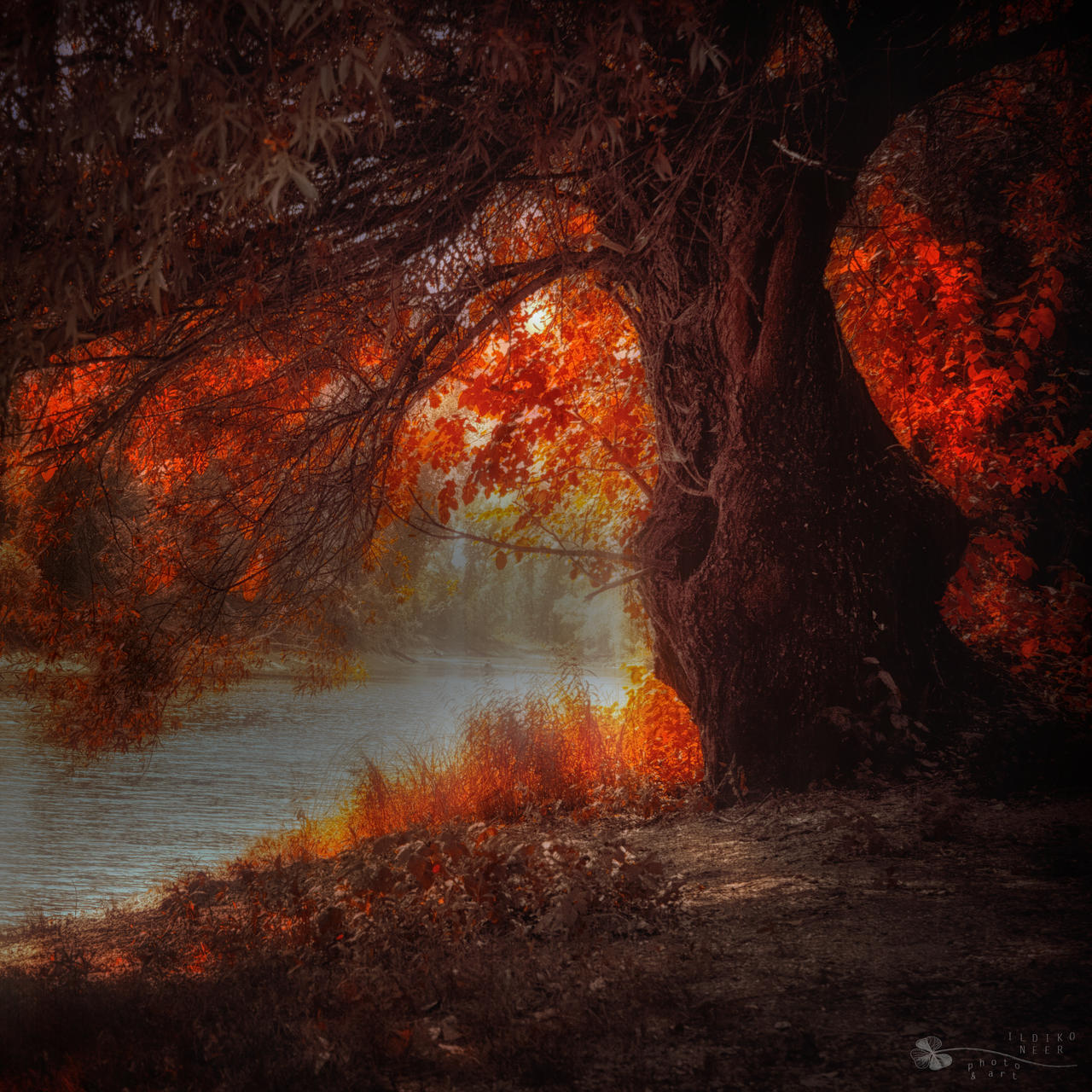 Love me under the burning tree by ildiko-neer