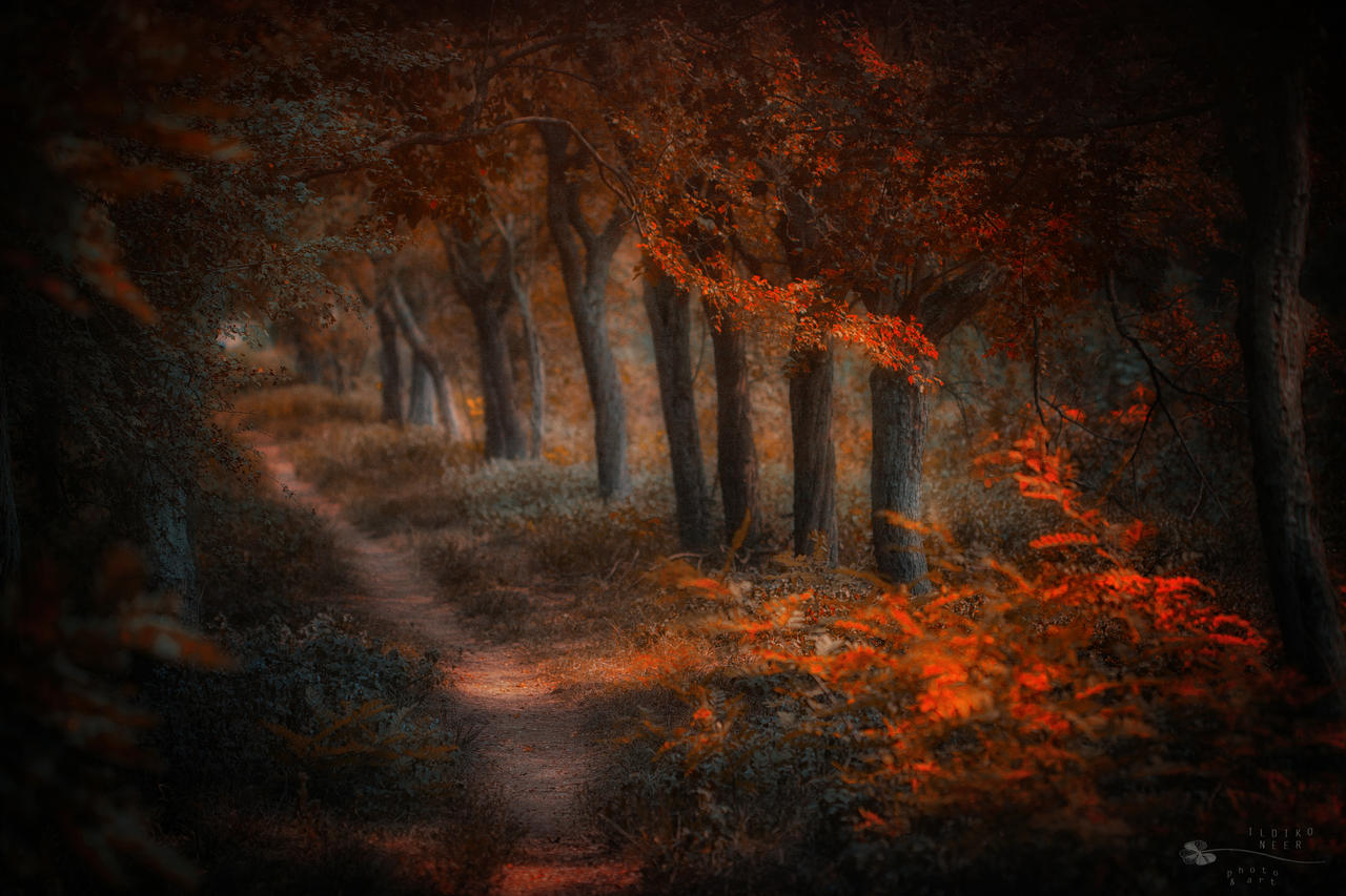 Autumn touch by ildiko-neer