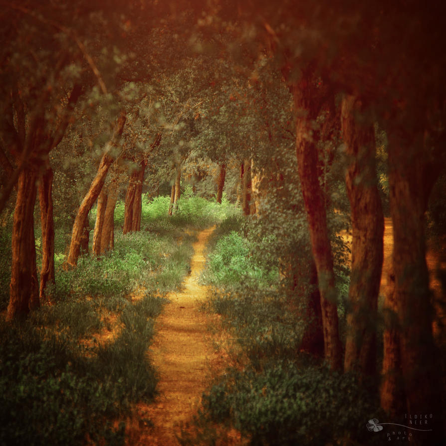 Path to the fairy tale by ildiko-neer