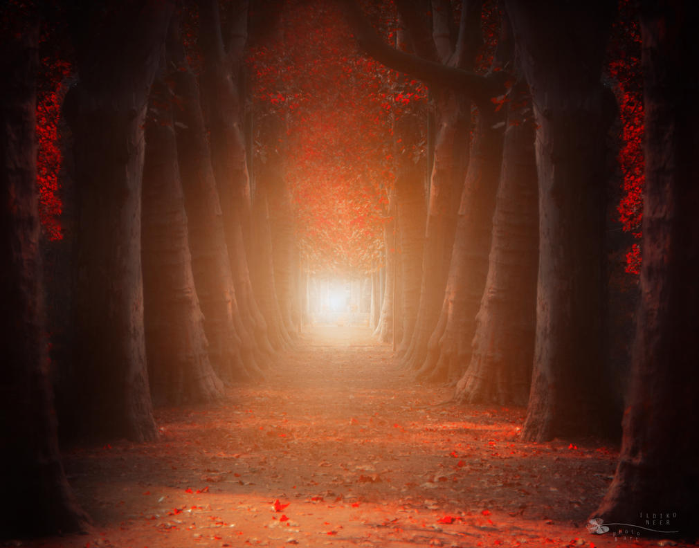 Dream by ildiko-neer