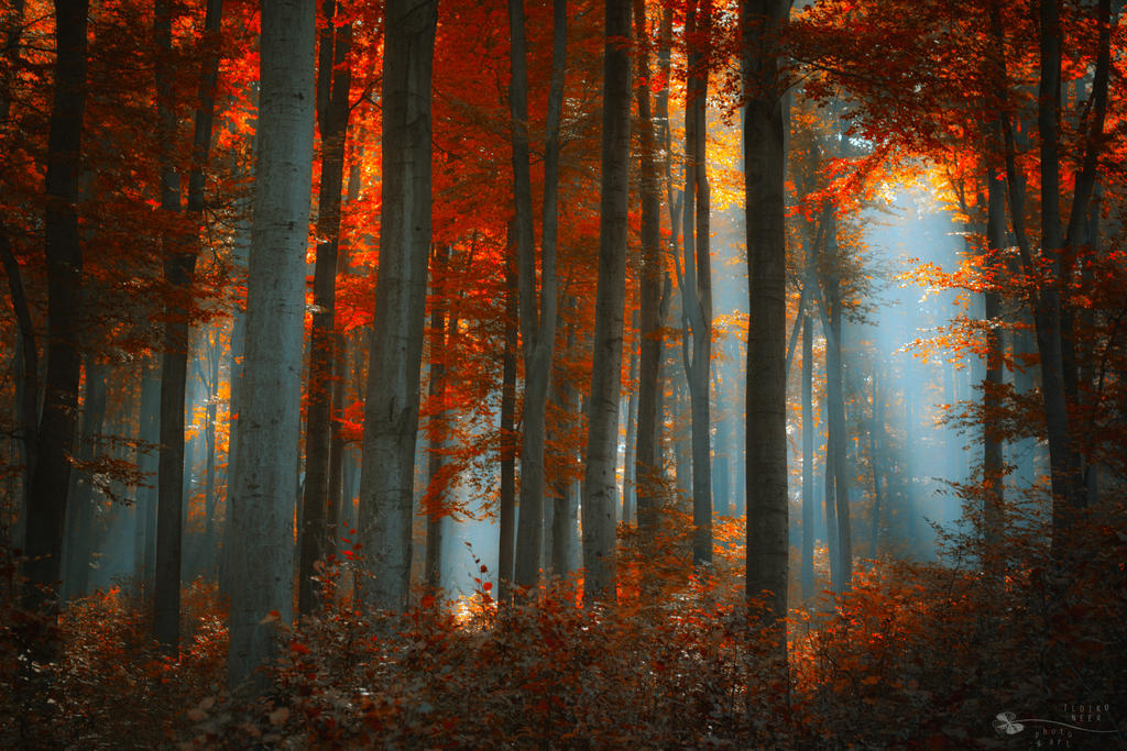 Something in the deep by ildiko-neer