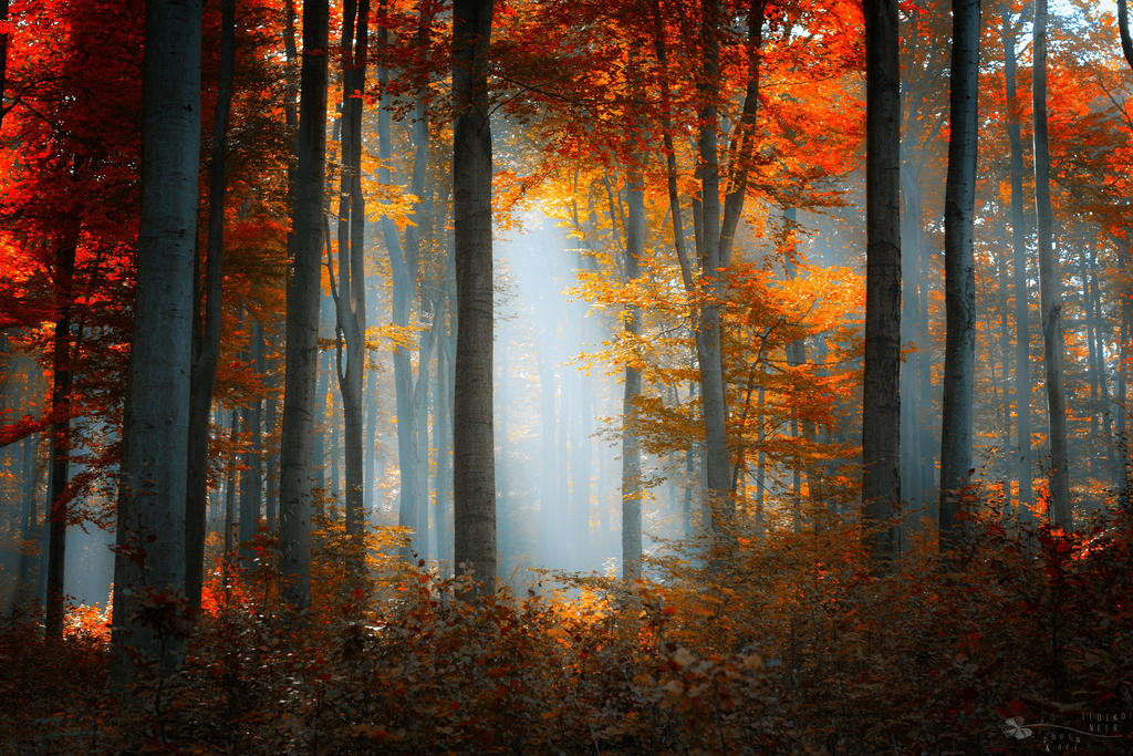 The best days by ildiko-neer