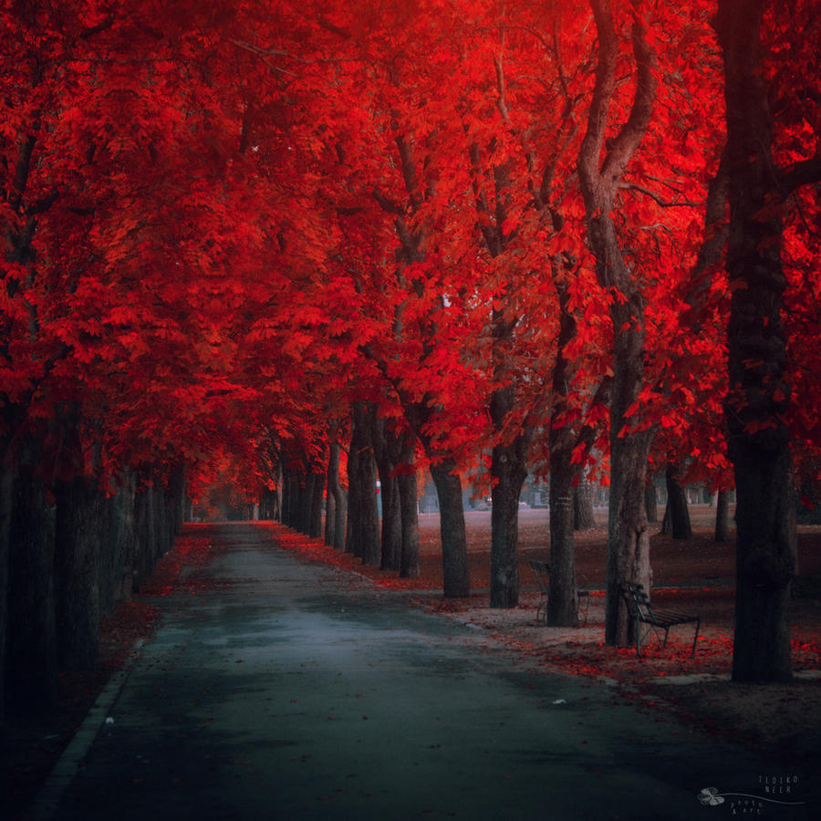 Season of fire by ildiko-neer