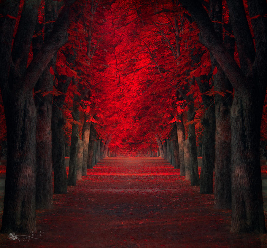 Endless passion by ildiko-neer