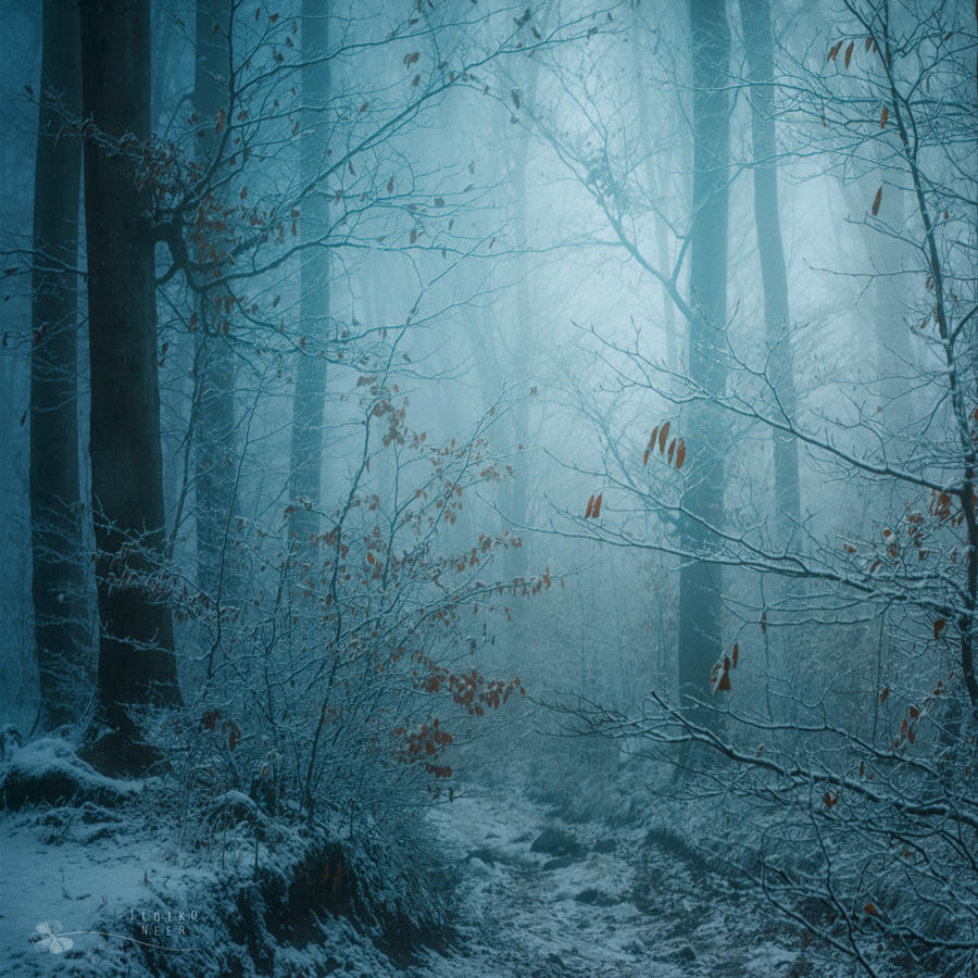 Winter dream by ildiko-neer