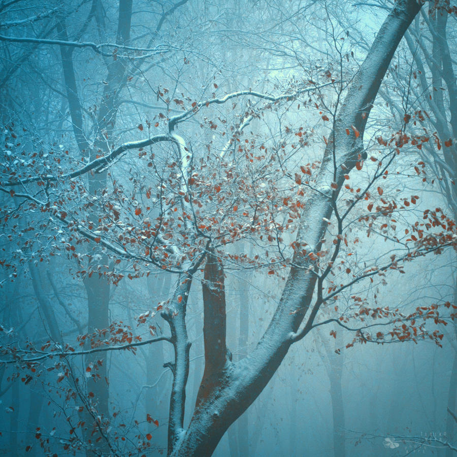 Last fight by ildiko-neer