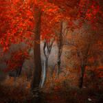 My Paradise by ildiko-neer