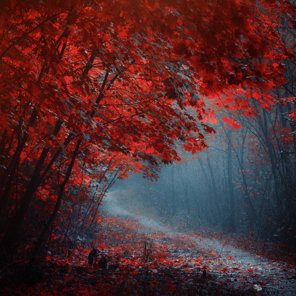 Leaves to Fall by ildiko-neer