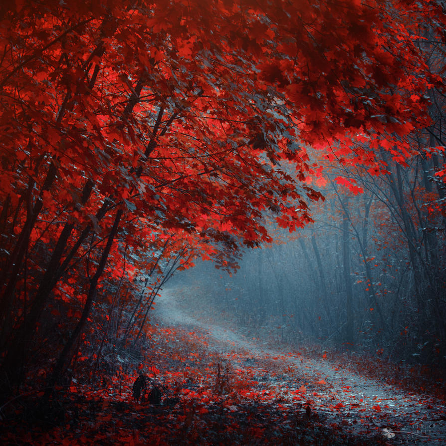 Leaves to Fall by ildiko-neer