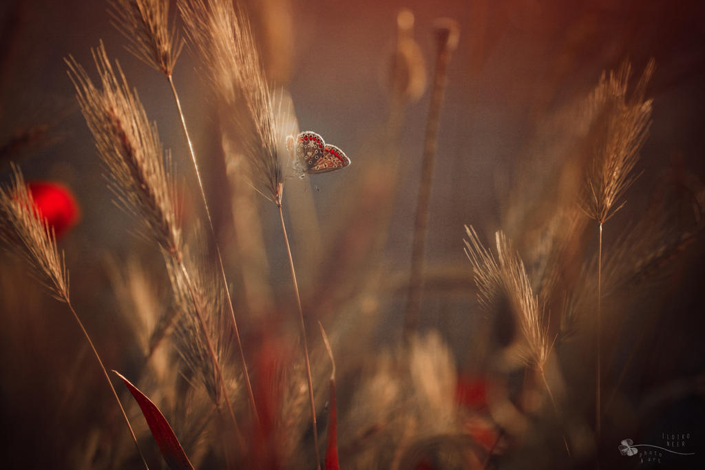 Hiding Queen by ildiko-neer
