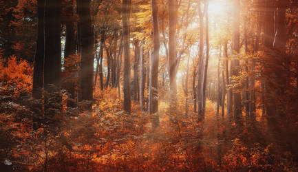 Wake-Up Call by ildiko-neer