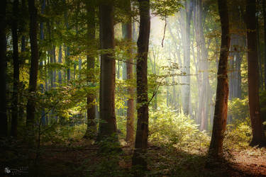 Forest Secrets by ildiko-neer