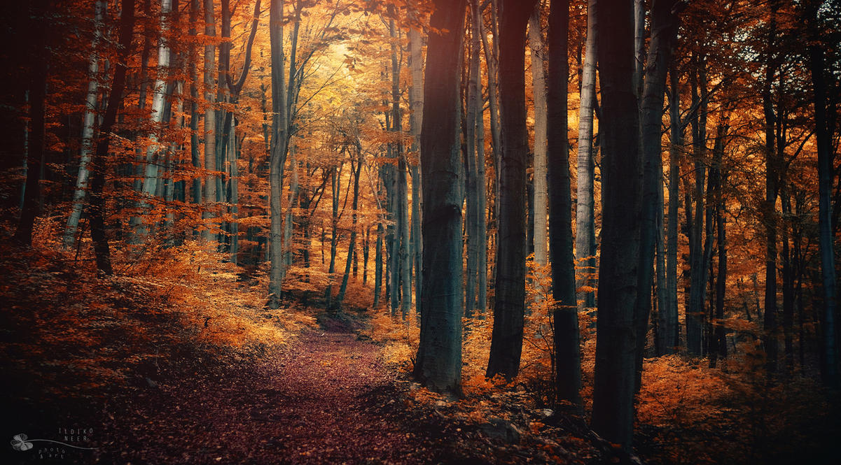 Fall Time by ildiko-neer