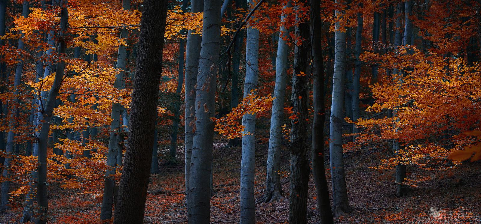 Autumn Mood by ildiko-neer