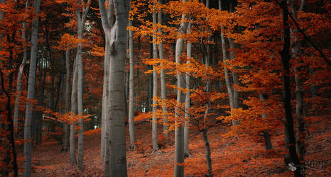 Wonder Fall by ildiko-neer