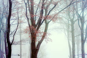 Winter Queen by ildiko-neer