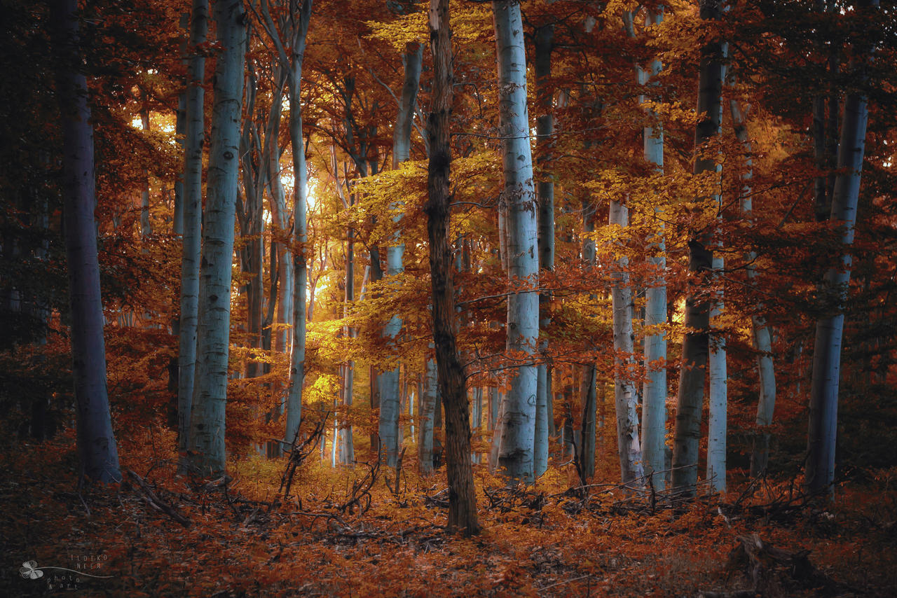 Color Season by ildiko-neer