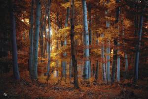 Color Season by ildiko-neer