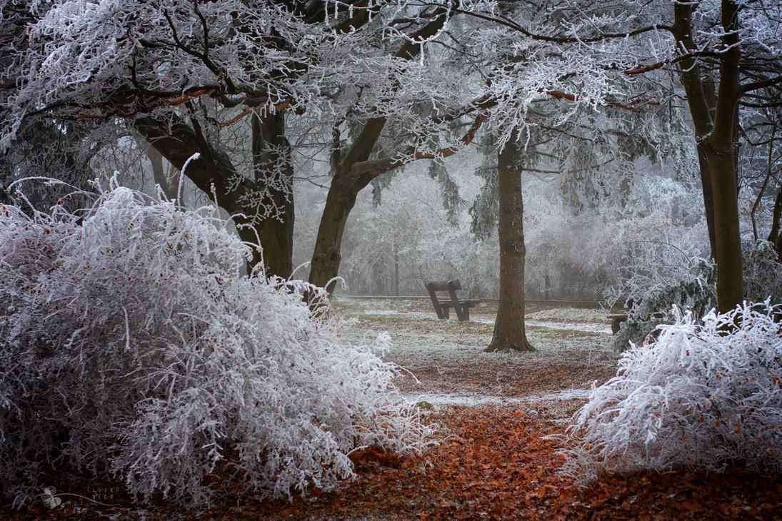 Winter Wonder by ildiko-neer