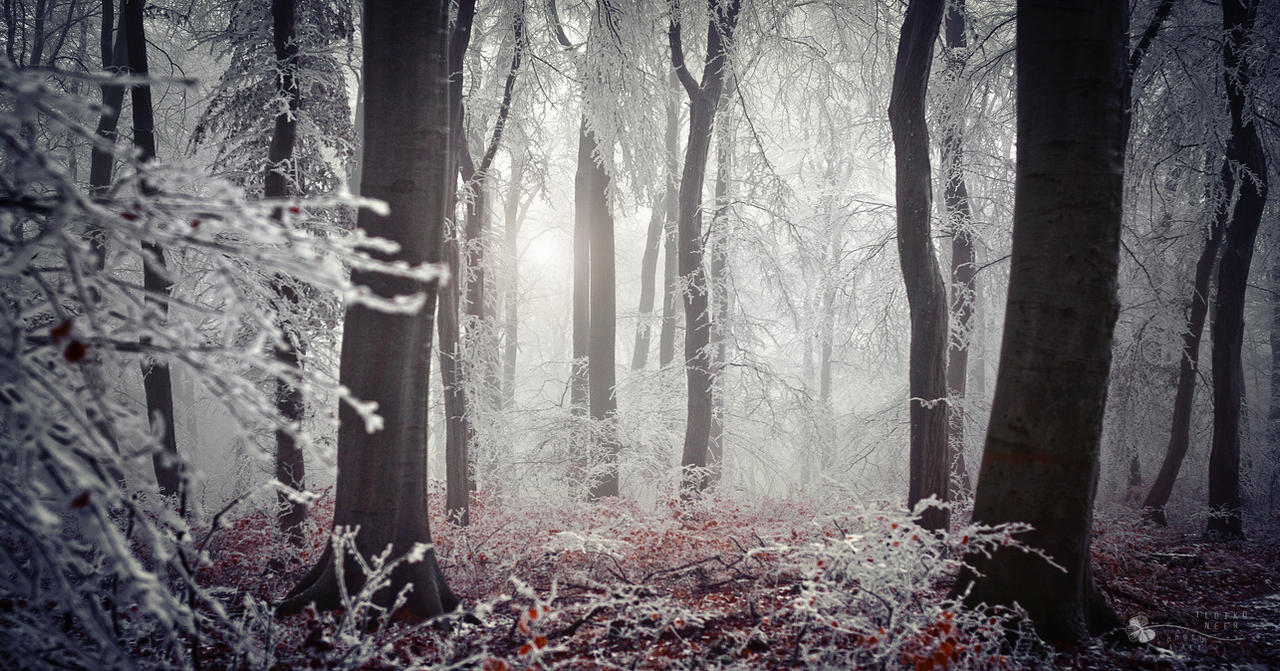 Winter Dress by ildiko-neer