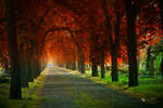 Wonder Trees II.