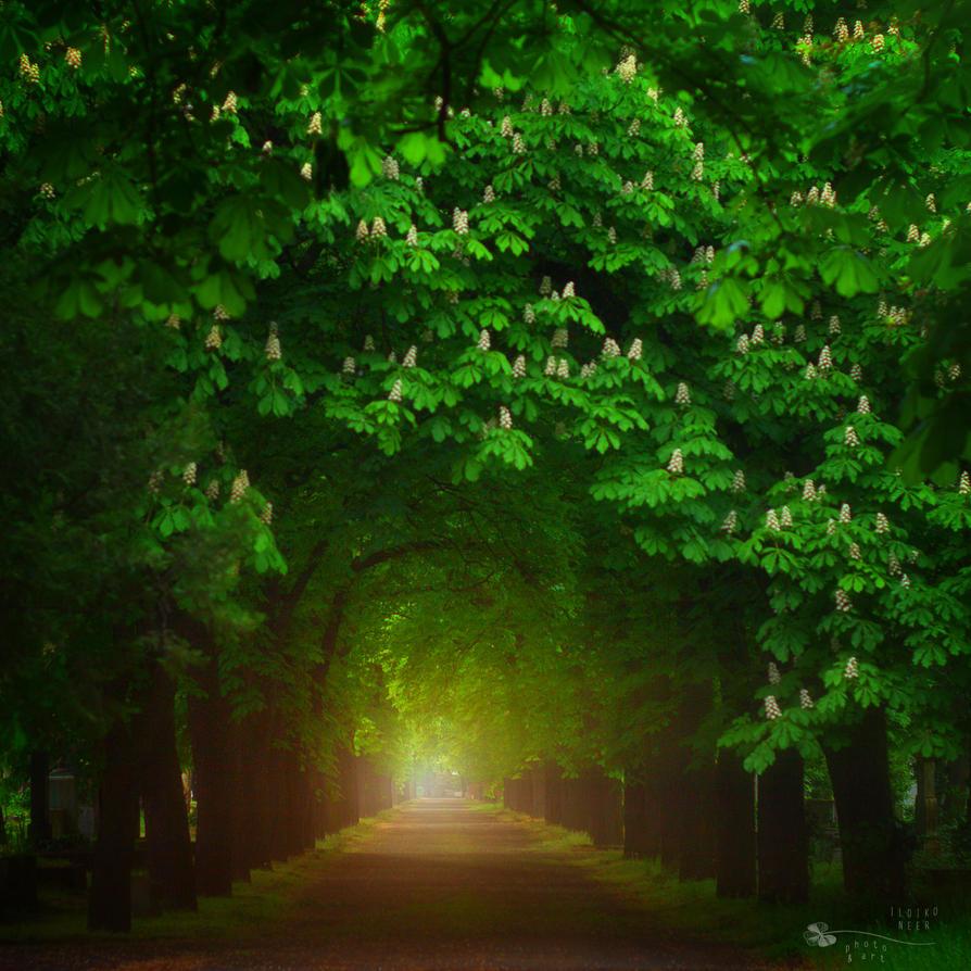 Tunel of Light by ildiko-neer