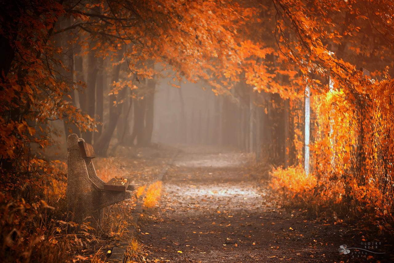 Waiting to Fall by ildiko-neer