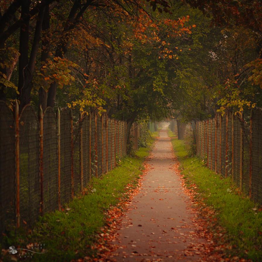Old Path by ildiko-neer