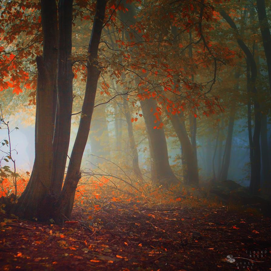 The Guiding Light by ildiko-neer