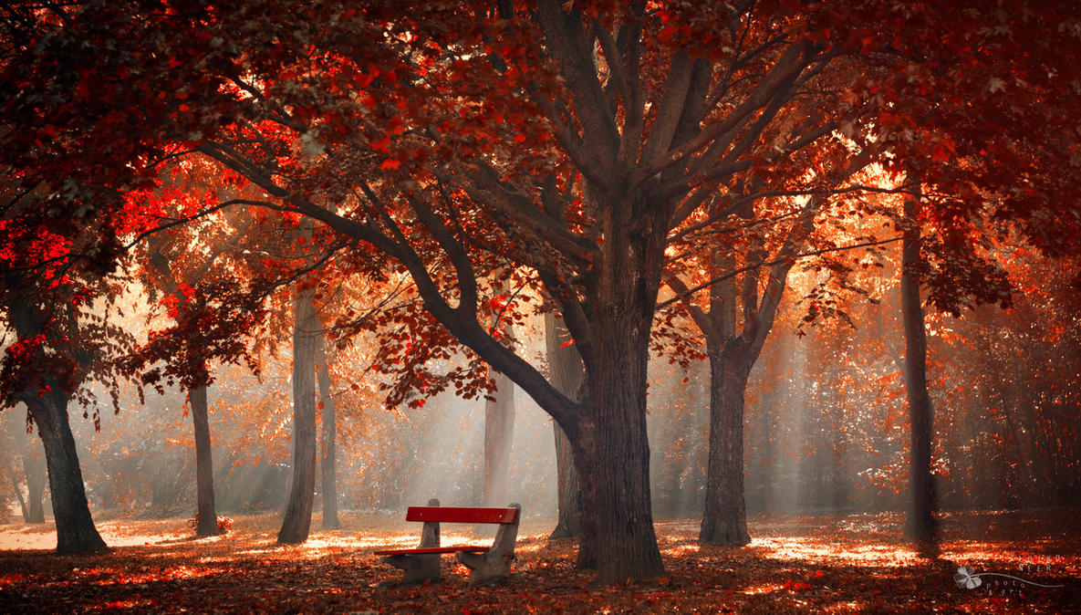 Umbrella by ildiko-neer